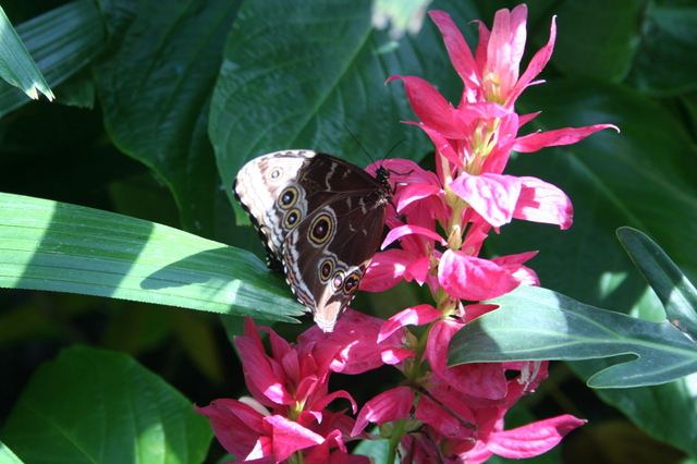Butterfly_house_025_2